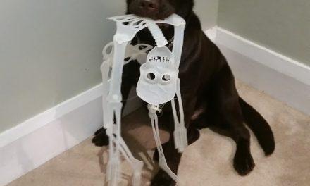 Halloween bones…