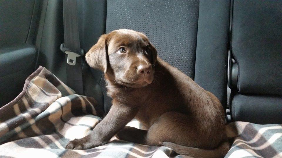 Meet Buddy